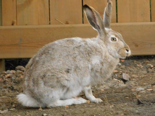 兔子在花園裡 的 免費圖庫相片