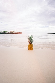 Pineapple Fruit on Seashore during Daytime