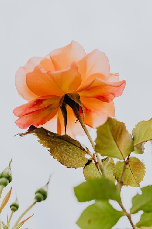 Ảnh lưu trữ miễn phí về đẹp, hệ thực vật, hoa