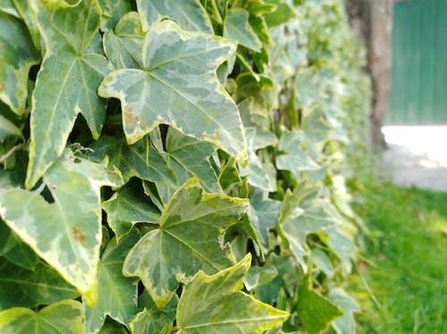 Immagine gratuita di all'aperto, erba, estate, foglie
