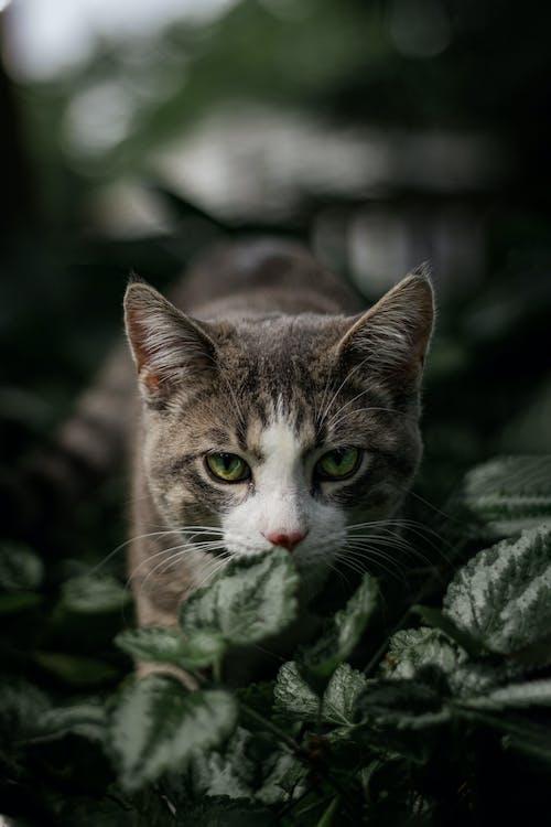 Brown Tabby Cat on Green Leaves
