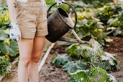 Foto stok gratis agrikultura, air, berkebun