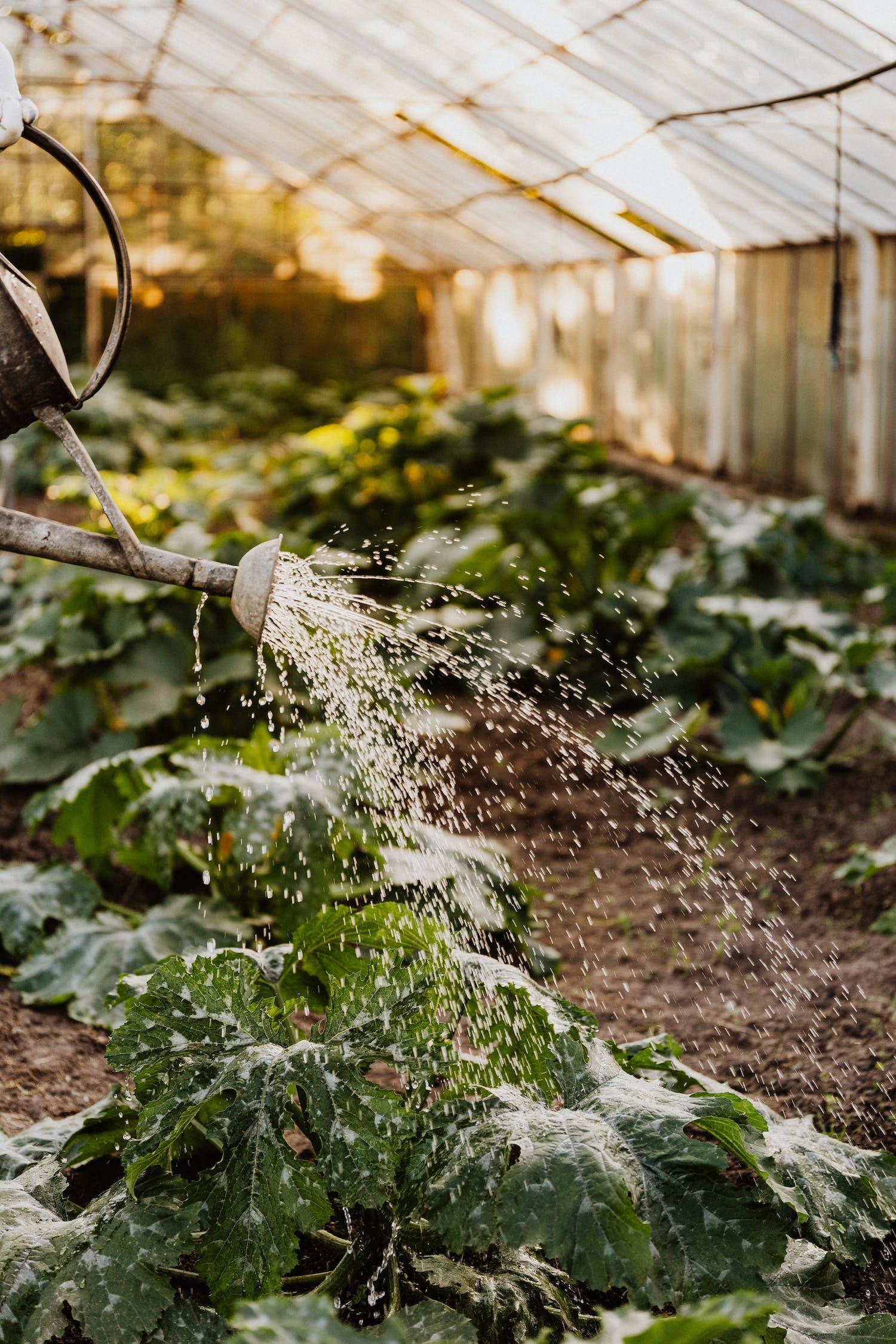 Immagine gratuita di acqua, agricoltura, annaffiatoio