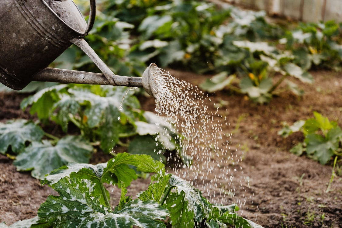 Close-up Photo of Watering Crops