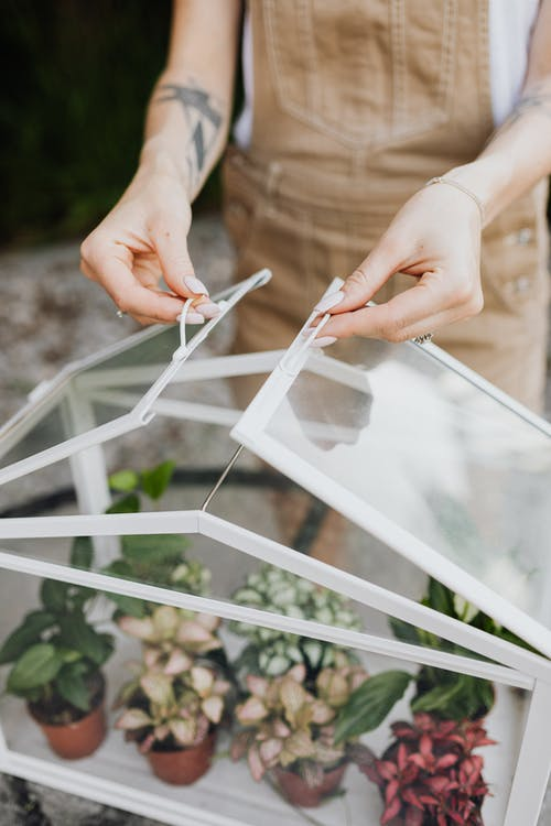 Person Holding A Clear Glass Box With Potted Plants