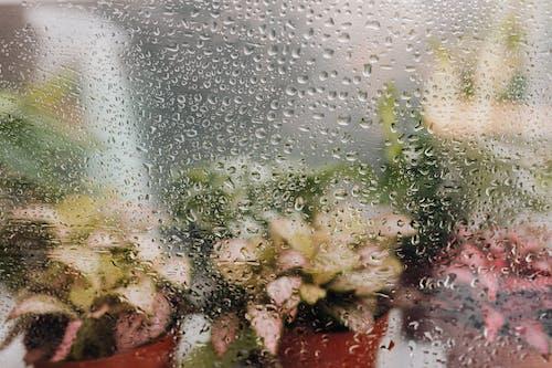 Foto stok gratis air, basah, berbayang