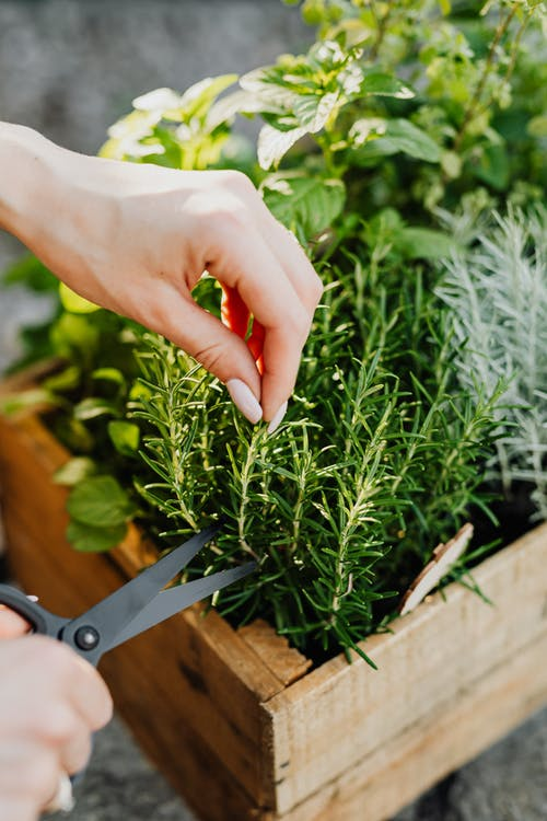 Person Holding Green Plant on Brown Wooden Table