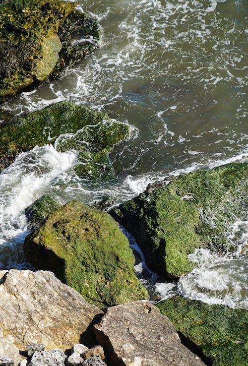 Free stock photo of algea, cliffs, forã¥r, natur