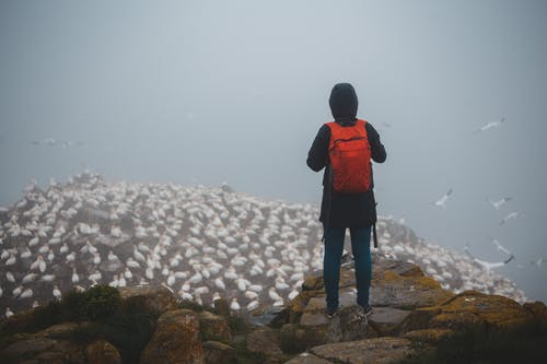 Unrecognizable tourist with backpack contemplating seagulls on mount in mist
