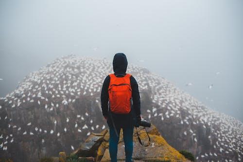 Faceless backpacker contemplating flock of birds on mount in fog