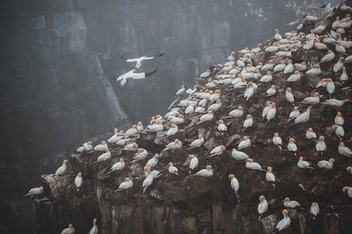Flock of seagulls on high rough mountain