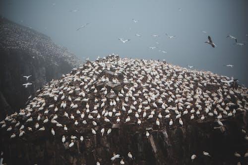 Flock of flying birds over ridge in daylight
