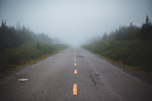 Empty asphalt road in foggy forest