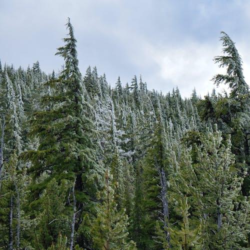 Gratis lagerfoto af forkølelse, frost, grøn, koldt