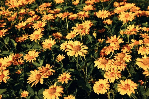 Yellow and Red Flowers in Bloom
