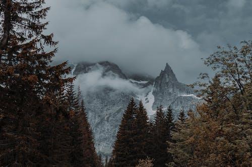 Gratis stockfoto met berg, bergen, bomen, buiten