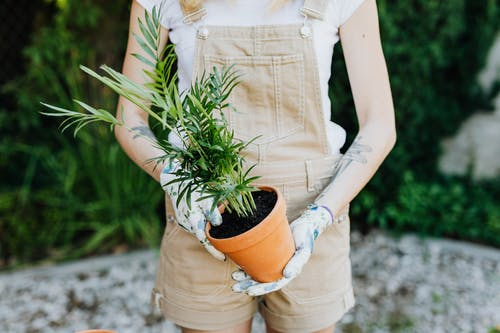 Woman in White Button Up Shirt Holding Green Plant