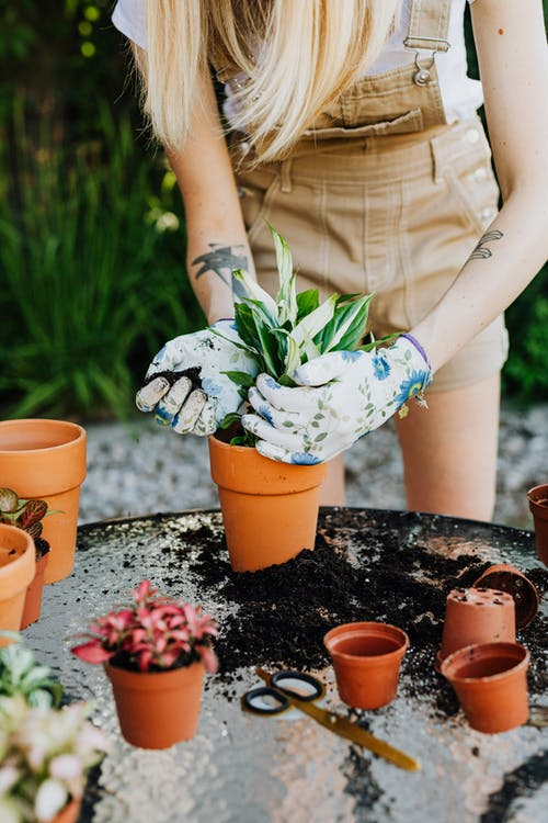 Woman Putting Plants On Pots