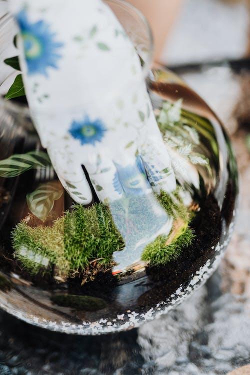 土, 土壤, 家庭園藝 的 免費圖庫相片