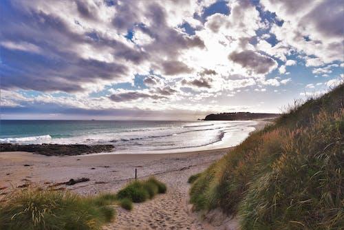 Free stock photo of beach, clouds, dunedin