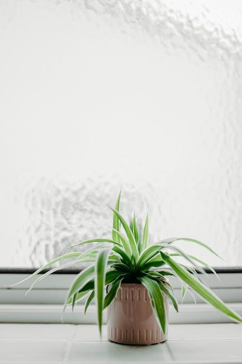 Základová fotografie zdarma na téma dekorace, ekologie, elegantní, flóra