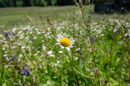 Free stock photo of dolomiti, fiore, italia, libertà