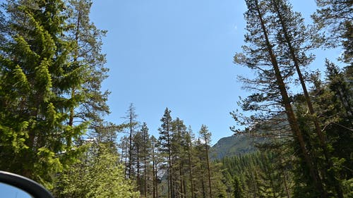 Free stock photo of alberi, cielo, dolomiti, italia