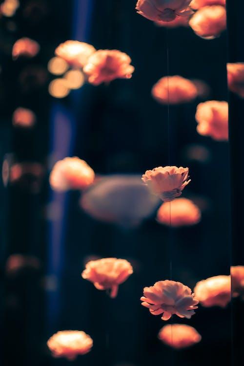 Photos gratuites de abstrait, fleurs, léger