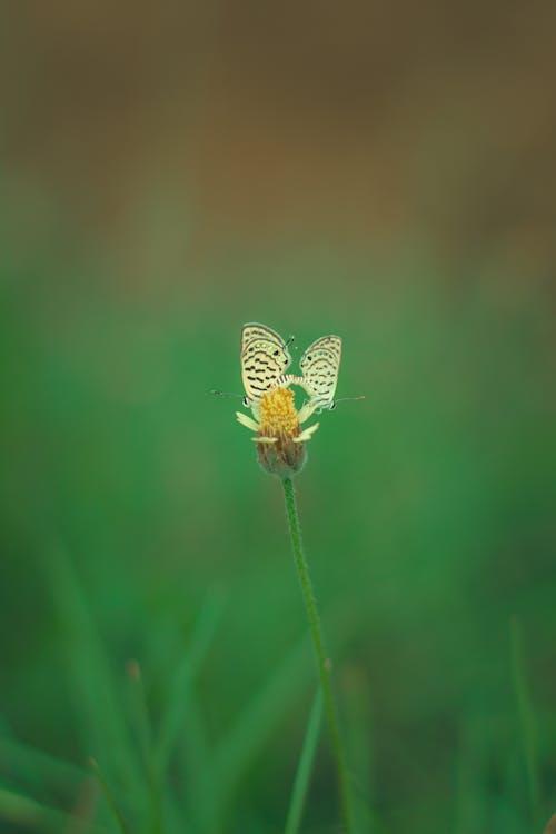 Free stock photo of brown butterfly, butterflies, butterfly, butterfly on a flower