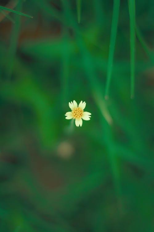 Free stock photo of flower, green, greenary, macro