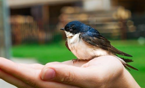 Photos gratuites de arrière-plan flou, aviaire, fermer
