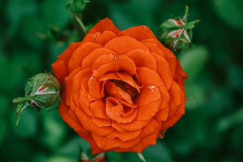 Foto d'estoc gratuïta de a l'aire lliure, amor, botànic, brillant