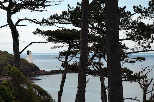 Gratis stockfoto met bomen, Cornwall, engeland