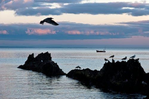 Gratis stockfoto met achtergrond, Cornwall, engeland