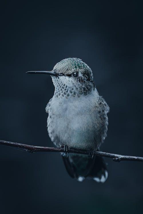 Fluffy bird sitting on twig
