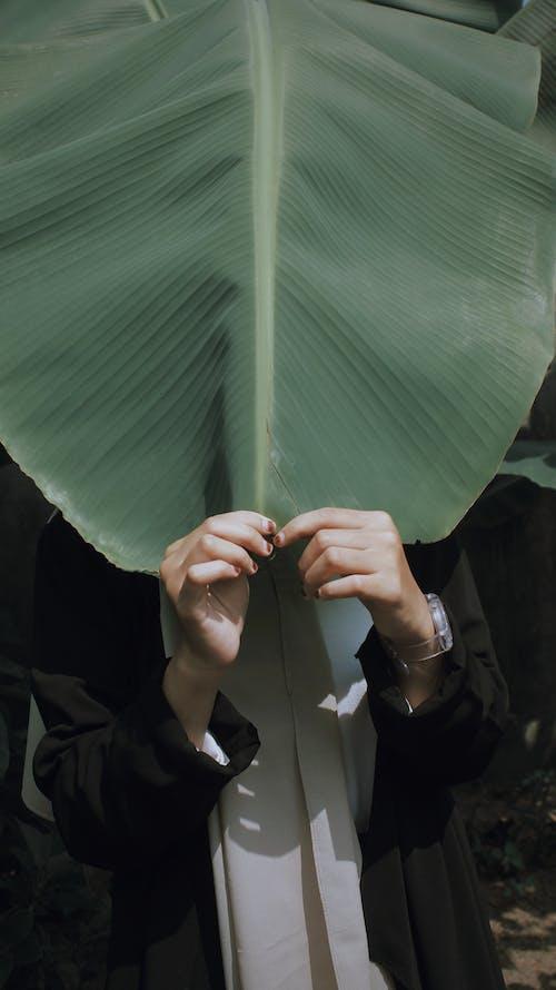 Бесплатное стоковое фото с банановый лист, вертикальный выстрел, держать