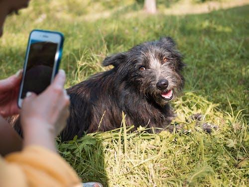 Foto profissional grátis de amizade, animal, animal de estimação, ao ar livre