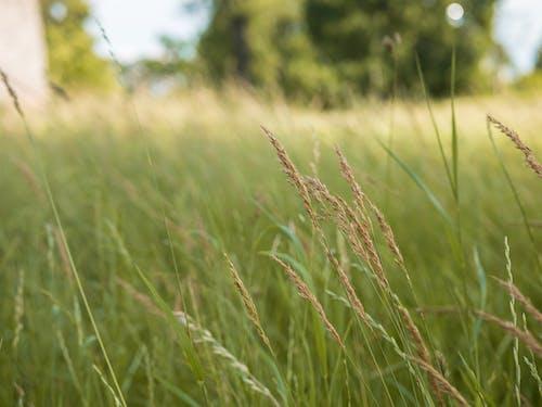 Foto profissional grátis de área, aumento, campina, campo