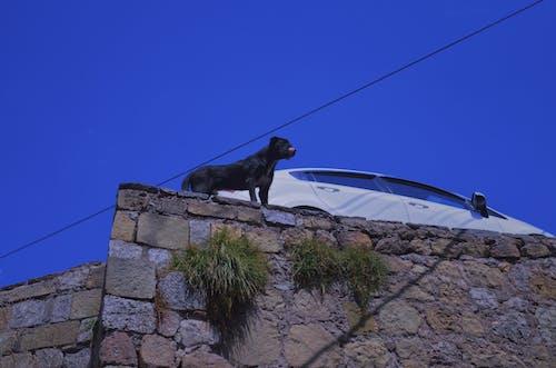 Free stock photo of cusco, cuzco, dog, dogs