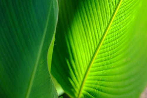 Free stock photo of green, leaves, nature, tropical