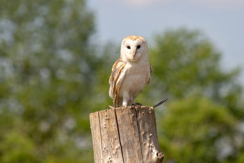 White and Brown Owl on Brown Wooden Post