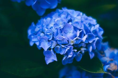 Photos gratuites de brillant, brouiller, couleur, croissance