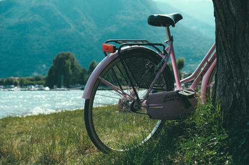 Bicycle parked near tree on picturesque lakeside