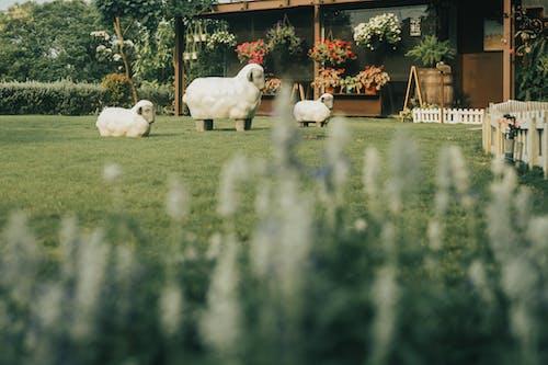 Foto d'estoc gratuïta de a l'aire lliure, agricultura, animal, arbre