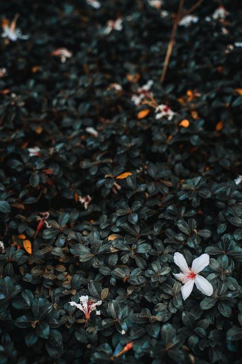 Foto stok gratis abstrak, berbayang, bunga, burung