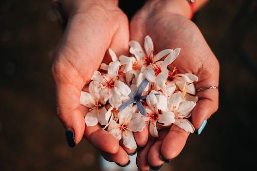 Foto stok gratis aromaterapi, bunga, cinta, dewasa