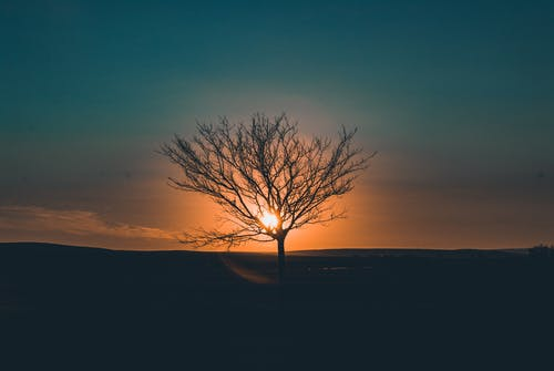 Silhouettes of tall tree growing on meadow against evening sky with sun setting on horizon in sundown time in nature