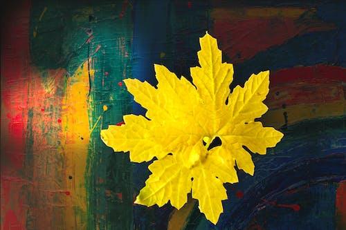 Immagine gratuita di foglie, foglie gialle