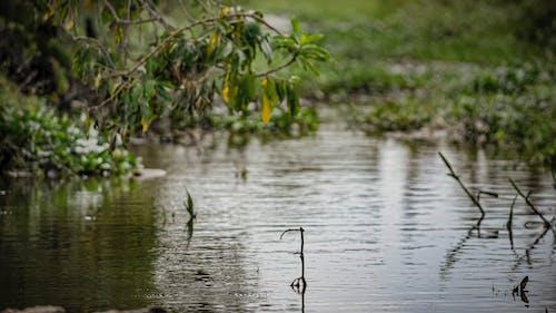 Δωρεάν στοκ φωτογραφιών με δίπλα στη λίμνη, εύρεση ειρήνης, Σρι Λάνκα