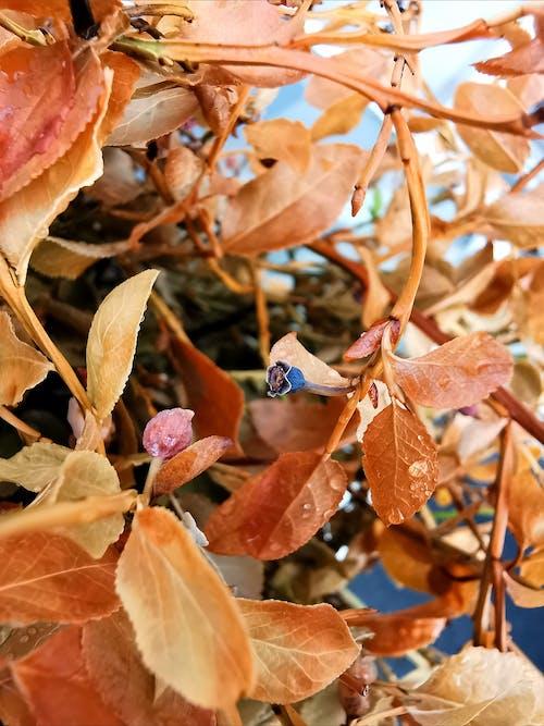 Free stock photo of blueberry, leaves, orange
